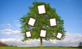 Der Stammbaum der Propheten bis Mohammed (sav)